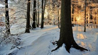 природа, лес, зима, утро