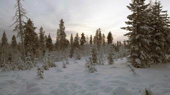 природа, зима, лес
