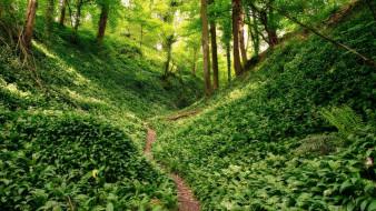 природа, лес, холмы