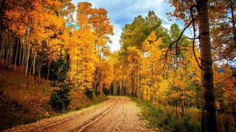 природа, дороги, осень, дорога