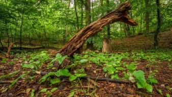 природа, лес, лето