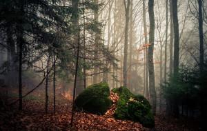 природа, лес, мох, дымка, листва, камни