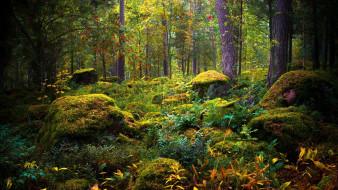 природа, лес, камни