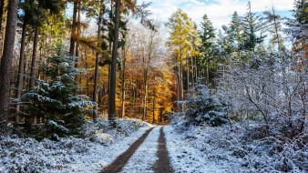 природа, дороги, первый, снег, лес