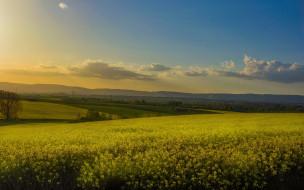 рапсовое поле, холмы, дымка, рапс, небо, цветы, облака, желтые, лето
