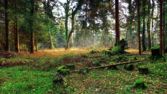 природа, лес, пеньки