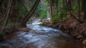 природа, реки, озера, пеньки, лес