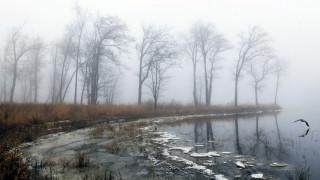природа, другое, весна, туман