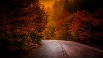 природа, дороги, осень, дорога, лес