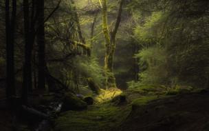 природа, лес, сосны