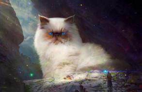 фон, кот, божество, люди
