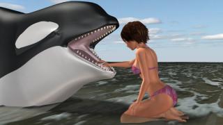 море, дельфин, фон, девушка, взгляд