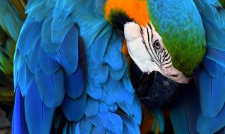 животные, попугаи, ара, попугай, птица