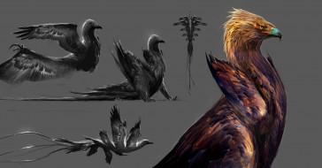 крылья, птица, хищник