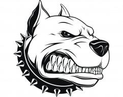 рисованное, животные,  собаки, pitbull, арт, злой, пес, питбуль, angry, dog, аватарка