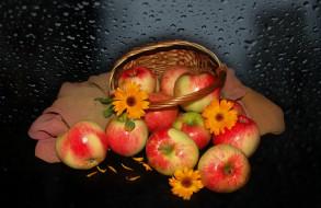 beauty, beautiful, красивые, harmony, корзинка, красота, яблоки, настроение, цветы, природа