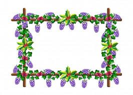 грозди, виноград
