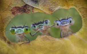 животные, стрекозы, насекомые, friends, forever, лист
