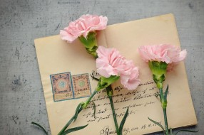 цветы, гвоздики, трио