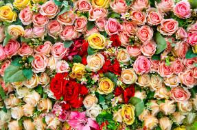 розы, лилии