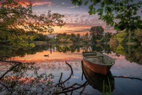 озеро, пруд, утка, лодка, отражение, ветки, деревья