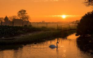 тропинка, вечер, деревня, дымка, лебедь, речка, домики, водоем, деревья, село, пейзаж, солнце, трава, природа, туман