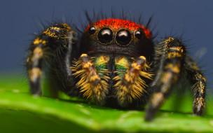 паук, лист, макро