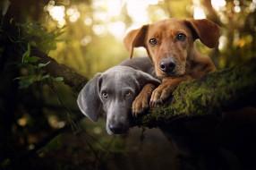 мордашки, две собаки, парочка, портрет, взгляд