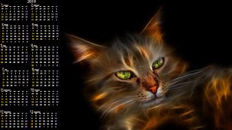 кошка, морда, кот