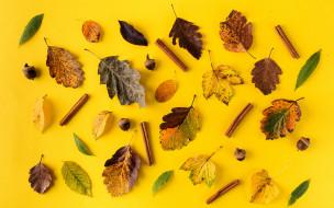 природа, листья, осенние, leaves, autumn, background, yellow, корица, colorful, фон, осень