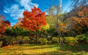 природа, лес, fall, tree, leaves, autumn, park, landscape, forest, colorful, парк, деревья, листья, осень