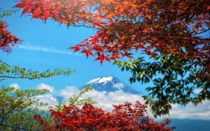 гора Фуджи, red, клен, colorful, Япония, Japan, maple, Fuji Mountain, осень, небо, листья, leaves, осенние, landscape, autumn