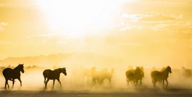 туман, кони, утро