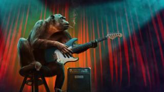концерт, обезьяны, разное