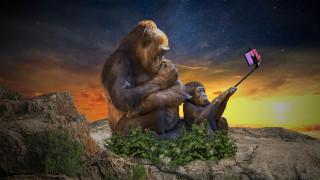 сэлфи, обезьяны, разное