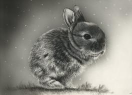 фон, кролик