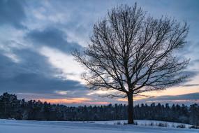сумерки, вечер, дерево, снег, закат, облака, небо, лес, поле, зима