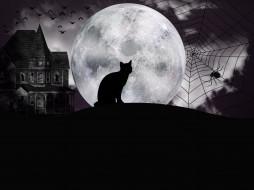 кот, луна, паук