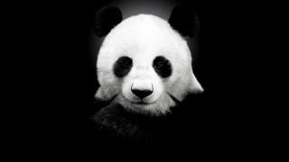 животные, панды, панда, голова