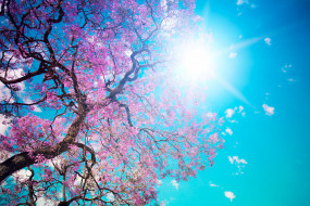 цветы, сакура,  вишня, небо, дерево, цветение