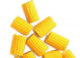 кукуруза, початки
