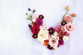розы, анемоны, ранункулюс
