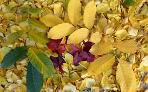 Листопад, золото осени