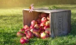 еда, Яблоки, цветок, яблоки, трава, ящик