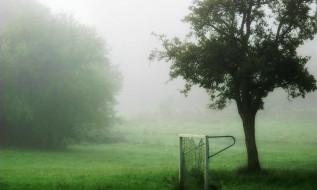 туман, дерево, ворота, трава, лужайка