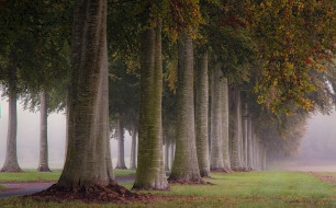 туман, деревья, утро