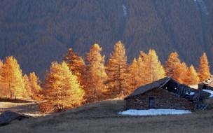 деревья, сарай, горы