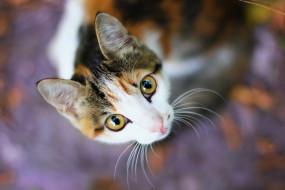 фон, взгляд, кошка