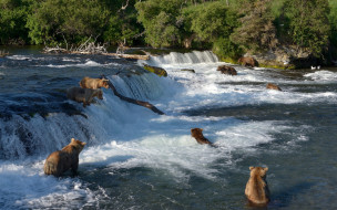 Национальный парк Катмай, Водопад Брукс, река, Brooks River, Река Брукс, Katmai National Park, Alaska, Аляска, медведи, водопад, рыбалка, Brooks Falls, купание
