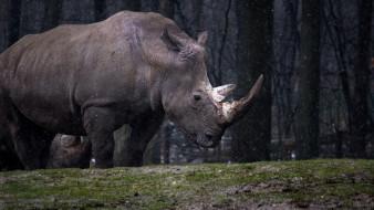 носорог, деревья